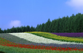 エルム駅前歯科クリスタルのインプラント相談会backbgound0069-歯医者-旭川